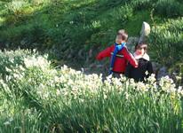 写真:六島の春水仙ツアー