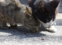 写真猫に会いに真鍋島・北木島へ