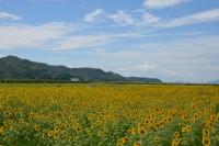 写真:笠岡湾干拓地