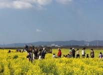 写真:菜の花フォトコンテスト2016