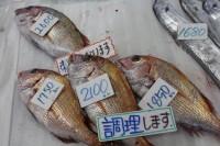 写真:道の駅・笠岡ベイファームで売られている鯛