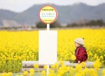 写真:菜の花フォトコンテスト2019