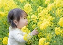 写真:菜の花フォトコンテスト2020